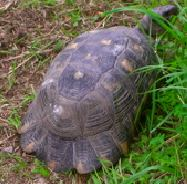 tortue1